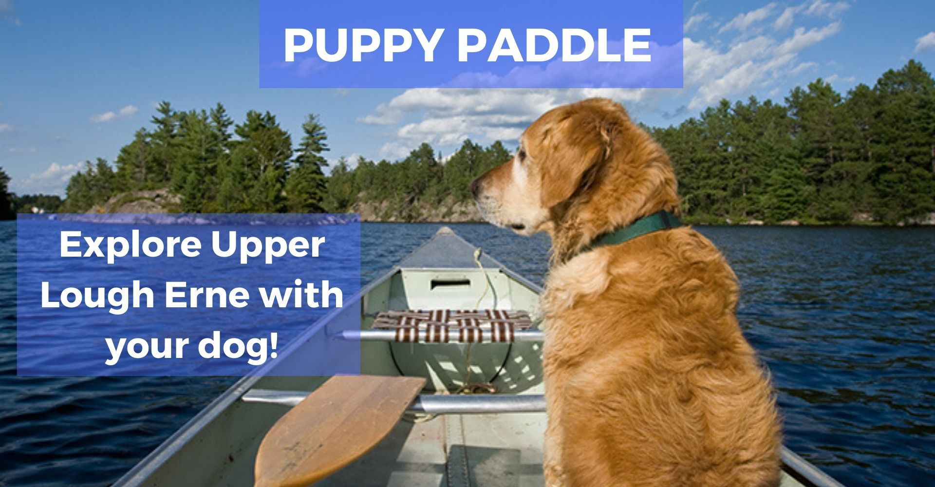 Puppy Paddle